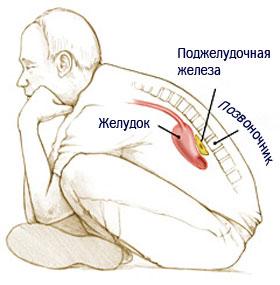 Поджелудочная железа - анатомия
